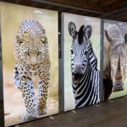 mein-wagner_LED-Display_fuer_Private-Safaris-Zuerich_April_2020